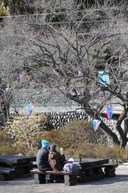 12/02/27  梅の公園取材